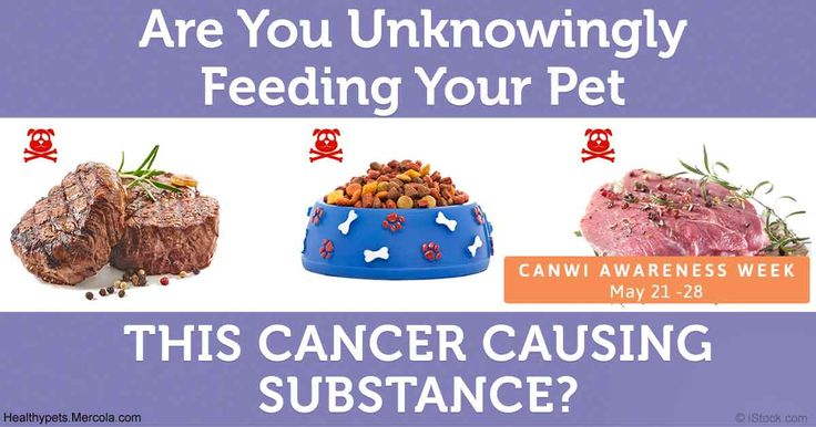 This research scientist made an alarming discovery - he detected carcinogens through hair analysis on his own dogs. http://healthypets.mercola.com/sites/healthypets/archive/2017/05/23/unknowingly-feeding-pet-carcinogens.aspx?utm_source=petsnl&utm_medium=email&utm_content=art1&utm_campaign=20170523Z1&et_cid=DM144156&et_rid=2015140194