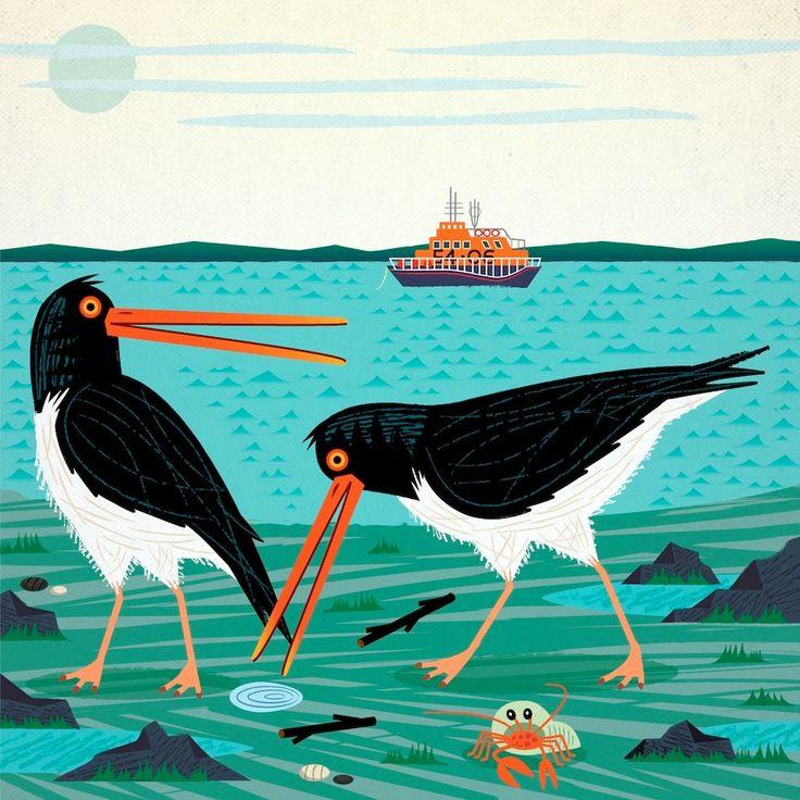 Le beccacce di mare iOTA illustrazione Limited Edition