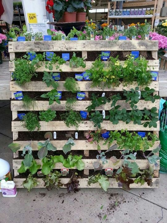 17 Best images about Things to make out of pallets on