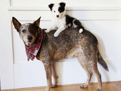 puppy on a dog