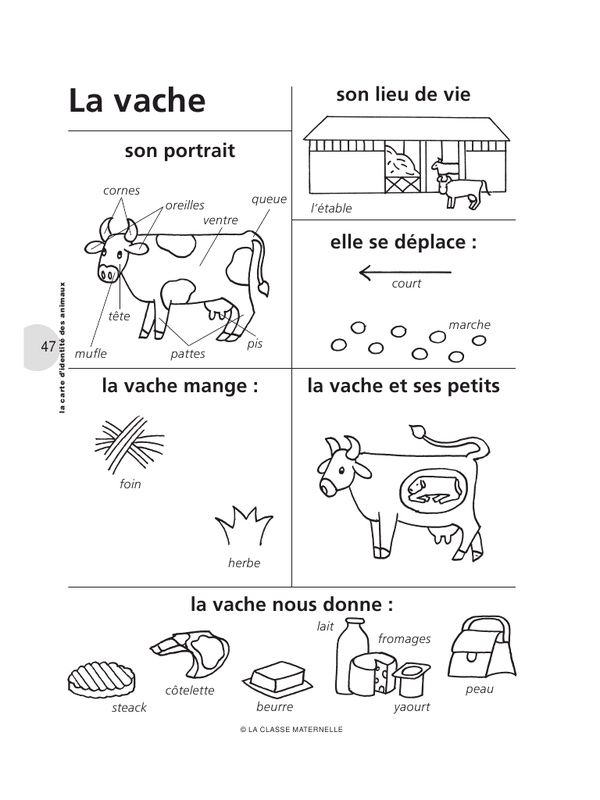 French Words about a Vache . Cow