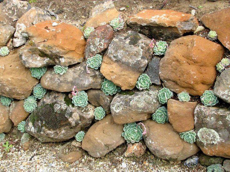 suculentas plantadas em uma parede de pedra – construiu uma pequena parede com suas pedras especiais …   – Succulent Landscaping