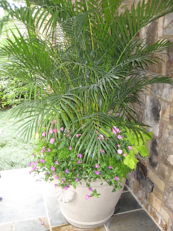 Tropical Pot  Photographed By Heather Moll Dunn Landscape And Garden  Designer On The Gardens