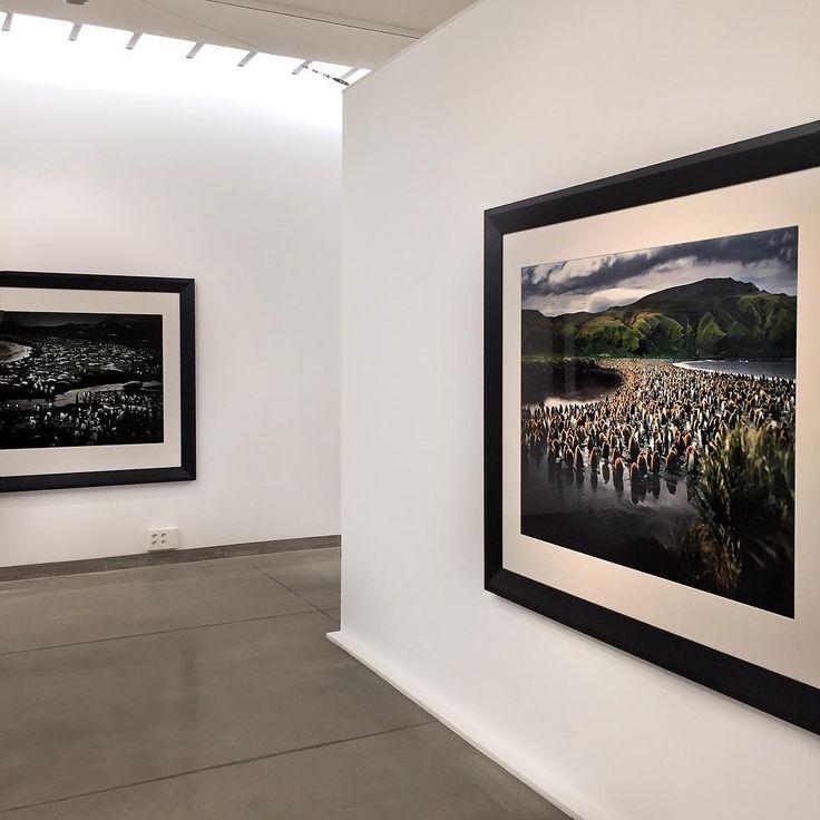 """Tomasz Gudzowaty """"Closer"""" - wystawa w Państwowej Galerii Sztuki (4.07.-4.10.2015) #closer #gudzowaty #tomaszgudzowaty #pgssopot #photography #art #animals #sopot"""