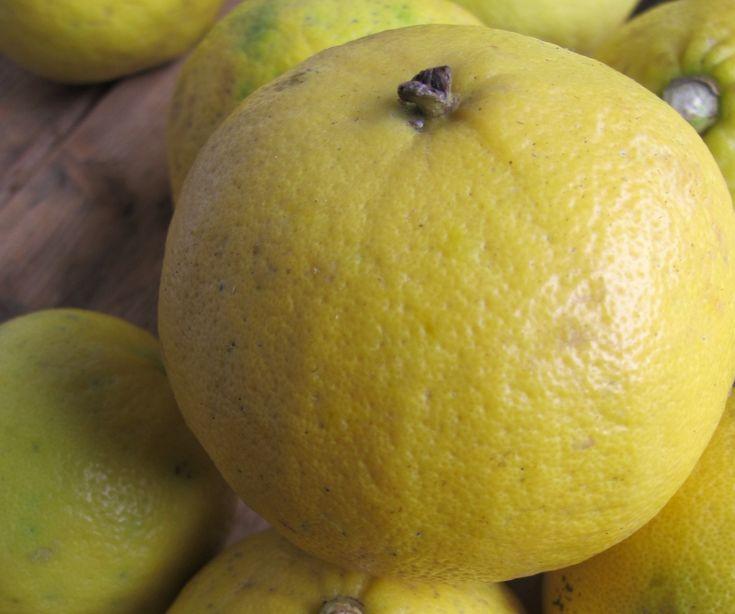 Succo di bergamotto, la bevanda che combatte il colesterolo Succo di bergamotto, la bevanda che combatte il colesterolo Il bergamotto è un agrume dalle tan