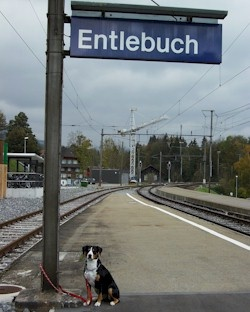Entlebuch in Switzerland - Where all the cool dogs are from! Click the pic to visit this cool doggie's site.