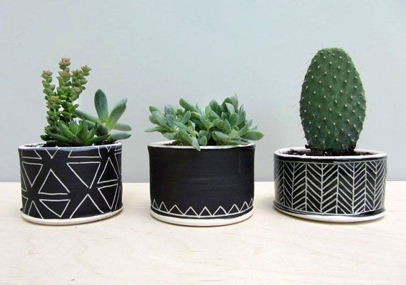 Grow some sculpture for your home! These look like cans covered with decorative paper. Since you don't water cacti often or much, this could work.