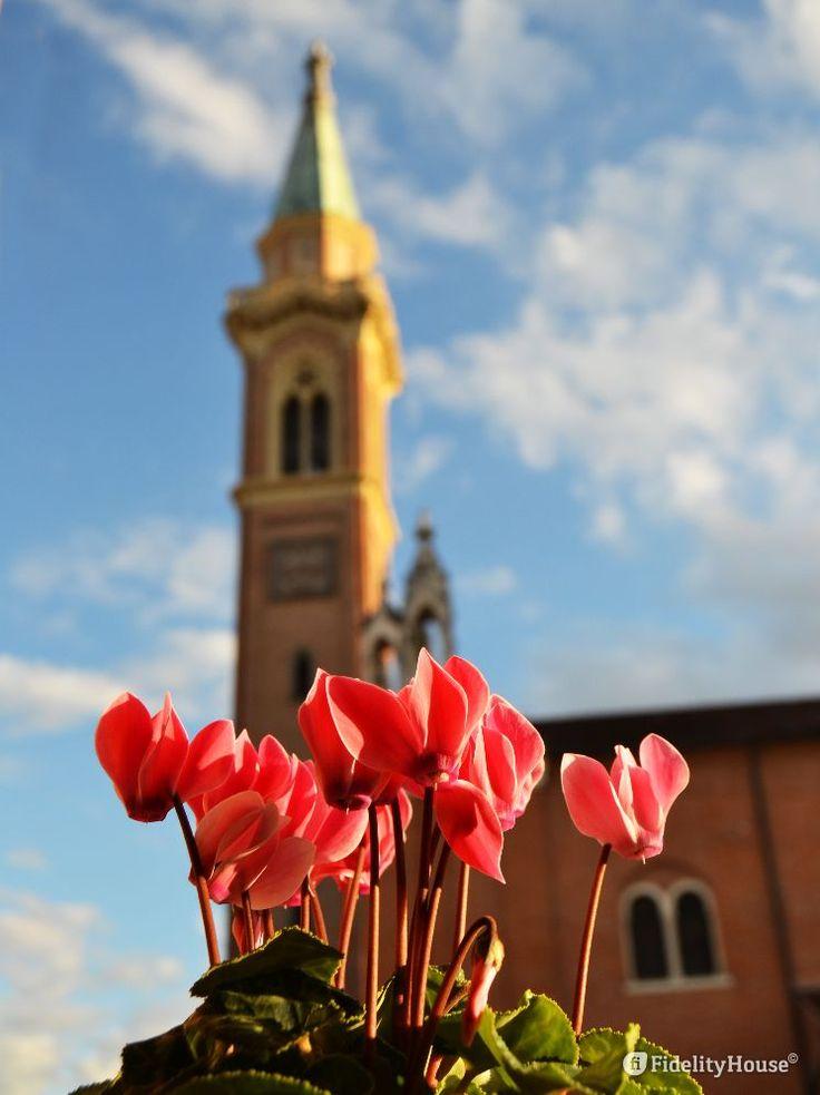 Sono in festa questi ciclamini per il sole che rallegra i suoi petali, per il cielo azzurro su cui anche oggi può contare.