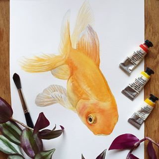 Video La Technique Du Quadrillage Poisson Rouge Aquarelle Et