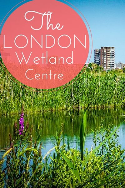 Busy, bustling South London is an astonishing place to find a rich wetland habitat. But that's precisely what you'll see at the London Wetland Centre, complete with blue-footed ducks, grey herons, moor hens, swans, swifts, sand martins and much more. Sir Peter Scott, who founded Britain's Wildfowl and Wetlands Trust in 1947, dreamed of an urban wetland that would be accessible to Londoners and travelers alike.