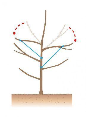 die besten 25 ideen zu apfelbaum auf pinterest. Black Bedroom Furniture Sets. Home Design Ideas