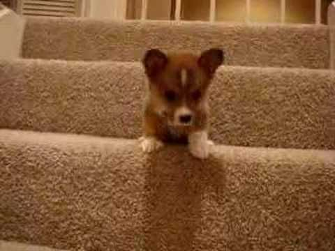 OK, now watch this short but important video of Butterball the dog trying to make it down the stairs.  | Can You Make It Through This Post Without Squealing?