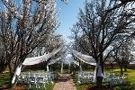 The Grove a  Las Vegas Wedding and Reception Venue - Orchard Wedding Chapel Photo Gallery