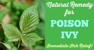 Poison Ivy Natural Remedy! Immediate Itch Relief! Works for poison oak, bug bites, rashes, stings, too!   Primally Inspired