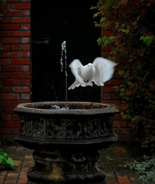 "White Dove, Italy (""Just like the white winged dove sings a song sounds like she's singin'... ooh... ooh... said ooh."")"
