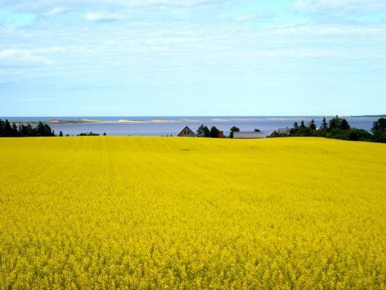 Beautiful PEI! Enjoying the sights along the north shore. by viking.
