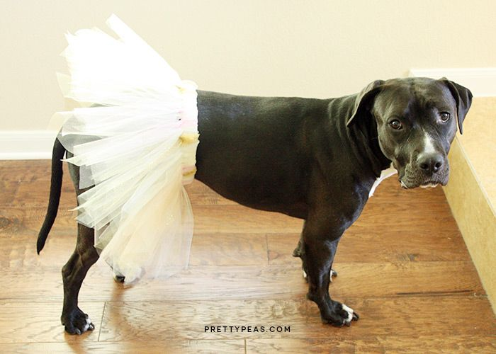 127 best doggy halloween images on pinterest doggies pets and diy dog tutu a cheap and easy costume solutioingenieria Image collections