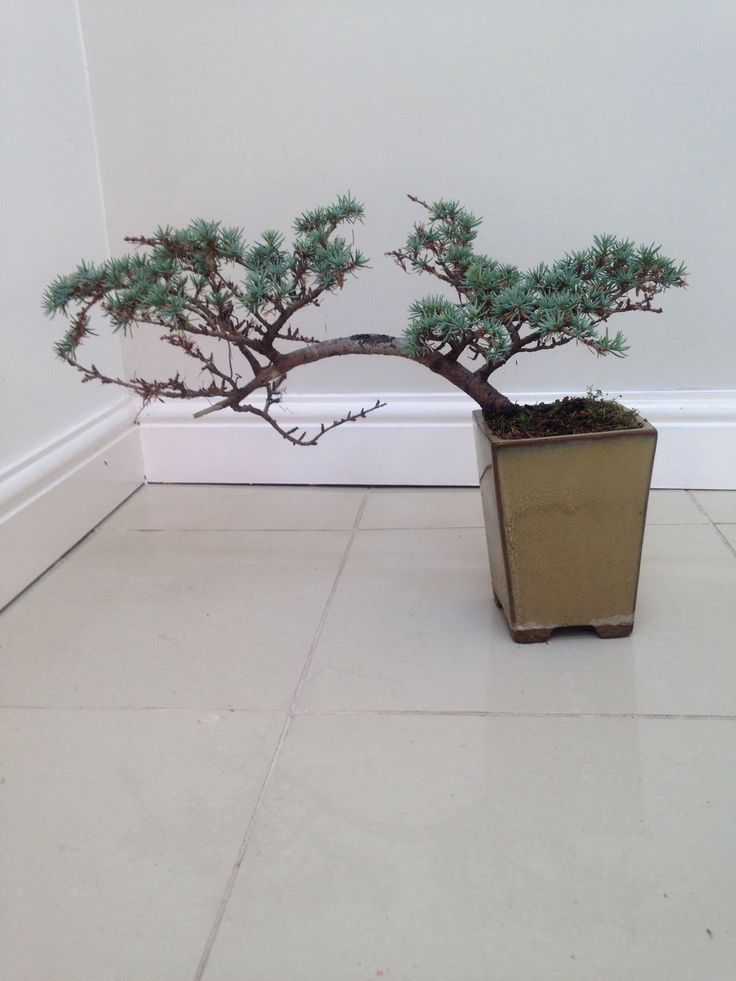 4 Bonsai Trees + Large Amount Of Different Type Of Accessories in Garden &…