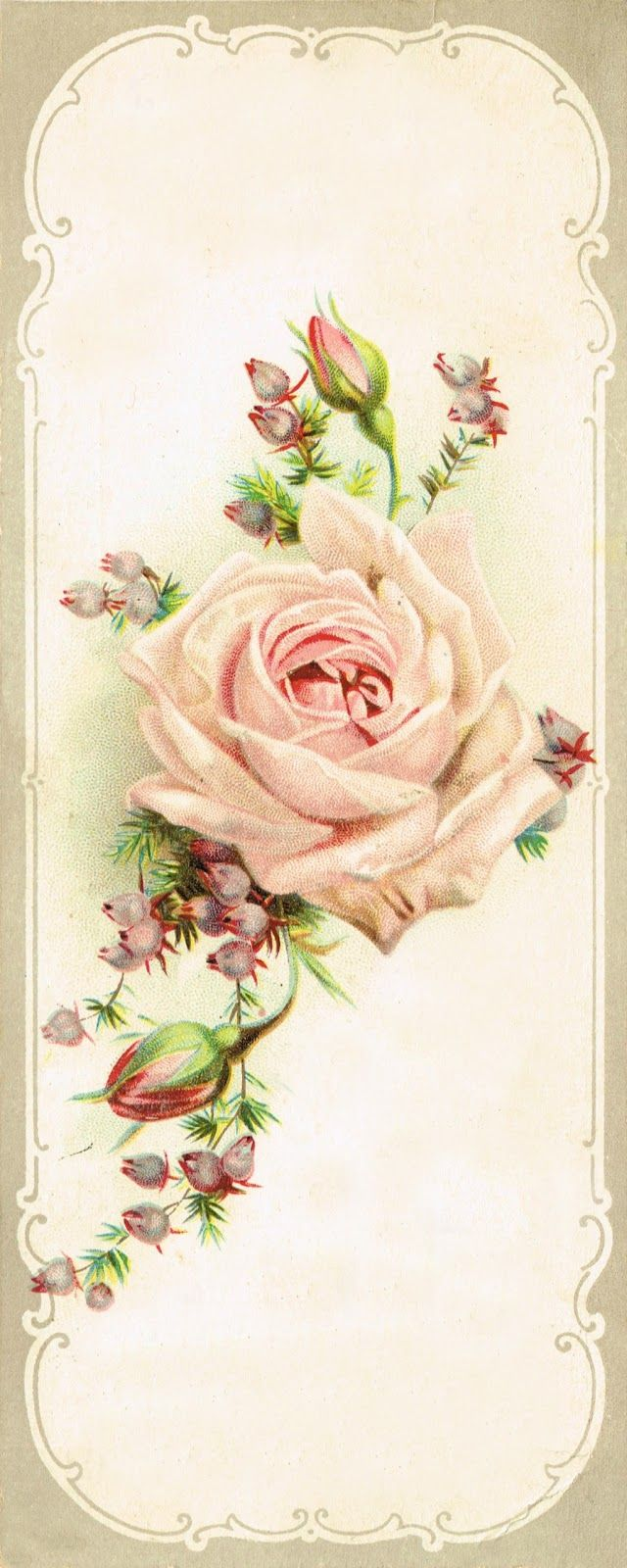 Knick of Time: Antique Graphics Wednesday - Beautiful Rose Image