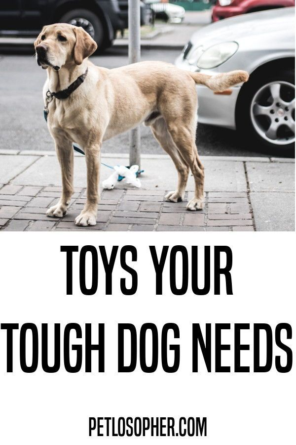 Dog Toys Top 8 Toys To Keep Them Busy Outdoor Dog Toys Tough
