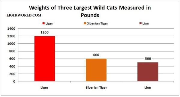 Liger, Lion and Tiger Weight Comparison.