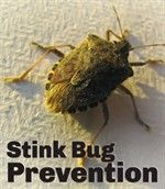 Stink Bug Prevention
