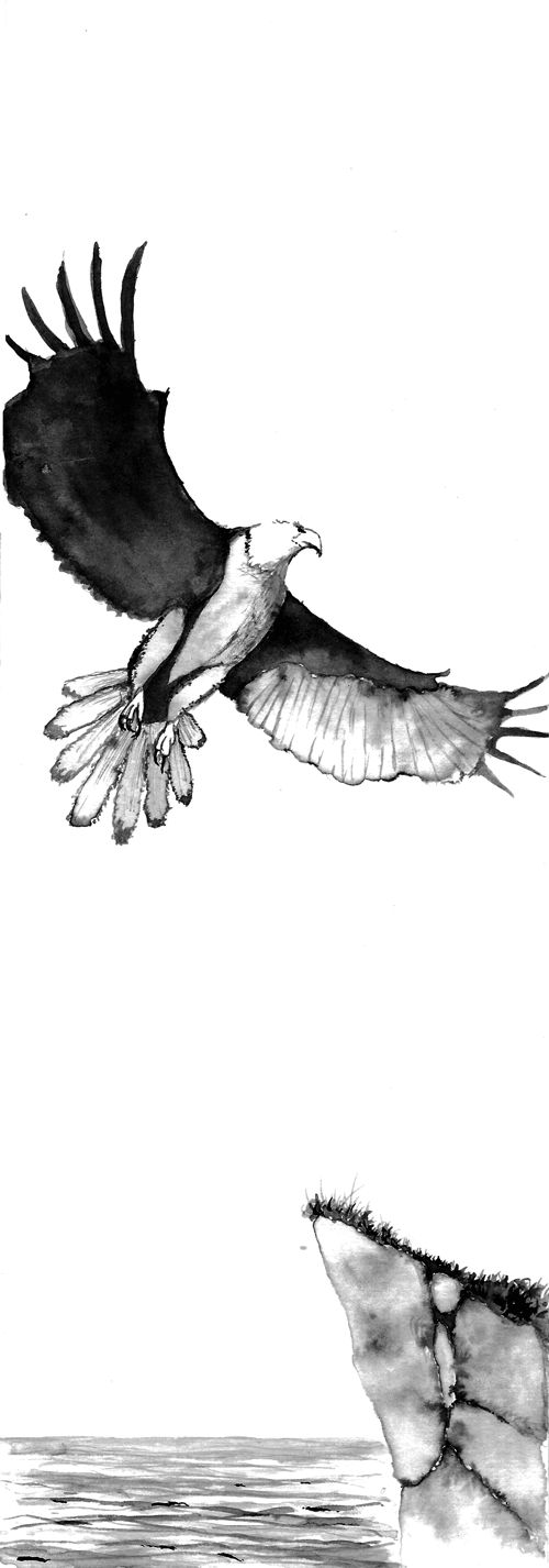 Eagle in ink. From Engine Head.