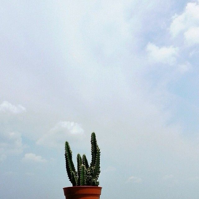 Cactus by @nantha_lee