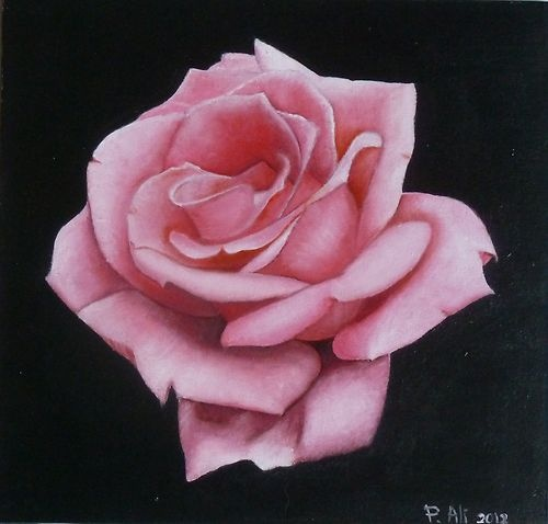 From the studio of Paola Ali, this high prestige oil card board painting is titled PINK ROSE. This exhibition quality oil painting, sized 30X30 cm is presented with a low reserve, I am however convinced that the painting will sell for a much higher price than it is listed at, whoever wins will have a very high quality oil painting, at a very reasonable price. So may I wish everyone good luck and if there is any questions you wish to ask please contact me.