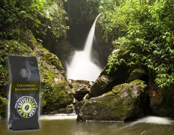 Colombian Bucaramanga -