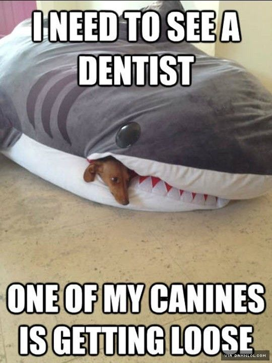 Need To See The Dentist - The Best Funny Pictures