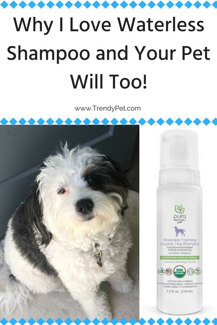 Why I Love Waterless Shampoo And Your Pet Will Too Waterless
