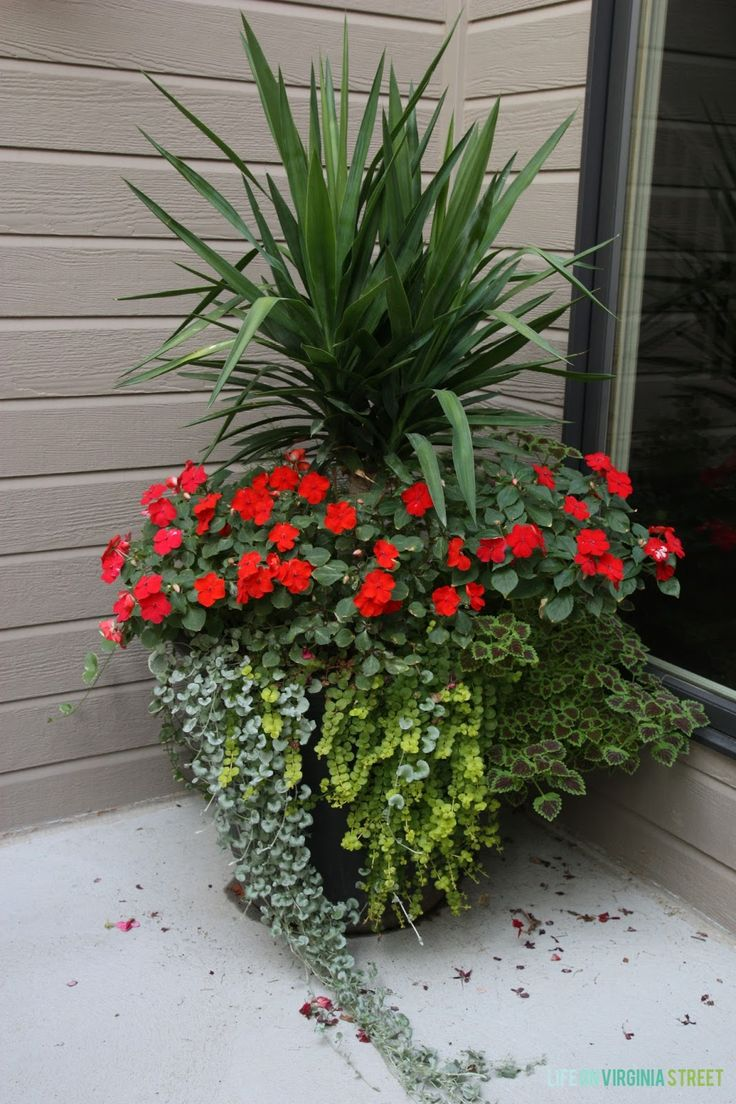 Summer Lovin': The Courtyard Edition. Link to fertilizer used for container plants