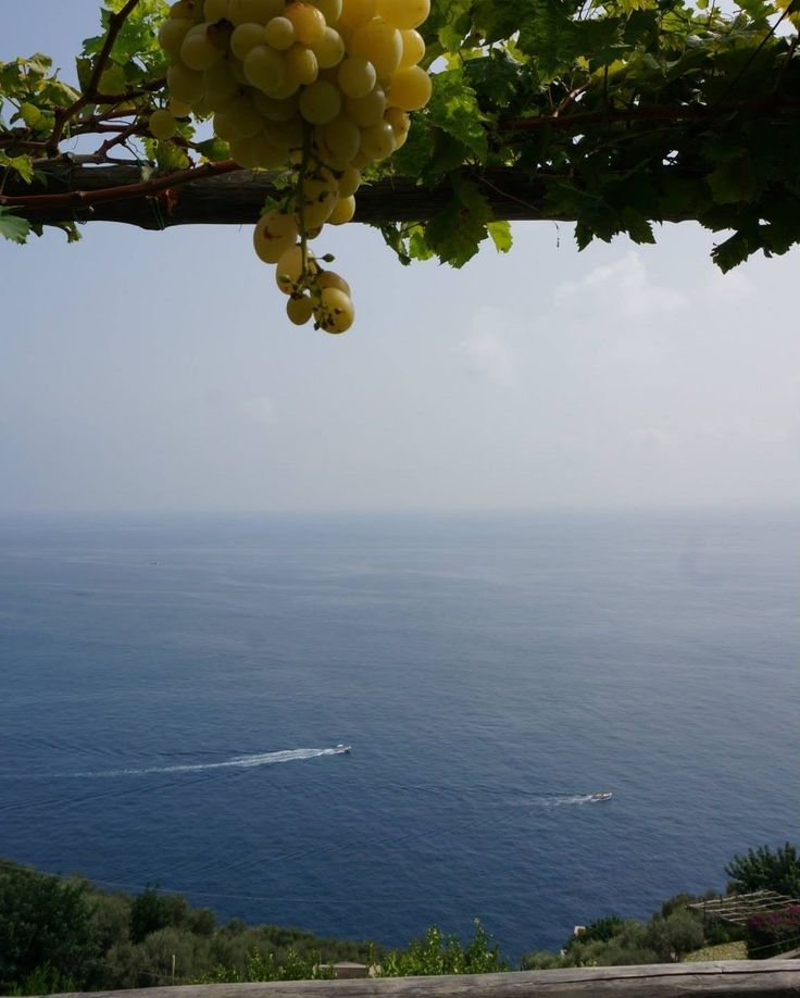This was our view from our hotel on the Amalfi Coast. They grew their own fruit and vegetables  It was amazing. We stayed at this little place in Praiano called @villagianlica and it was just perfect especially with a view like this!