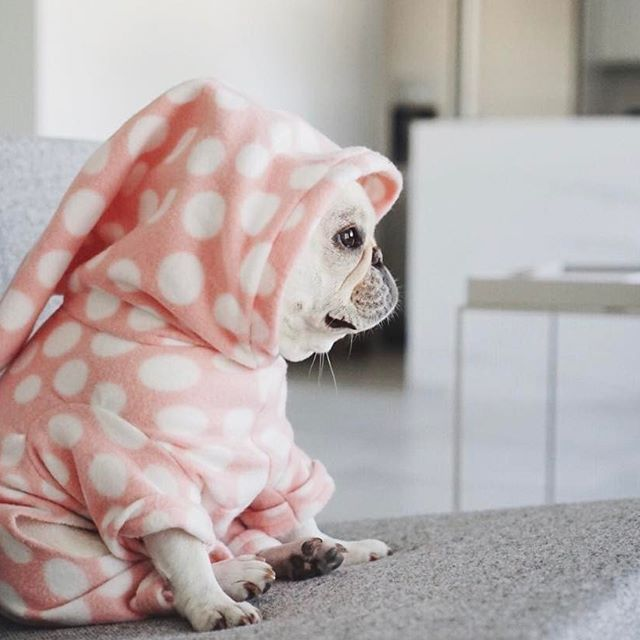 Room Temperature For French Bulldog