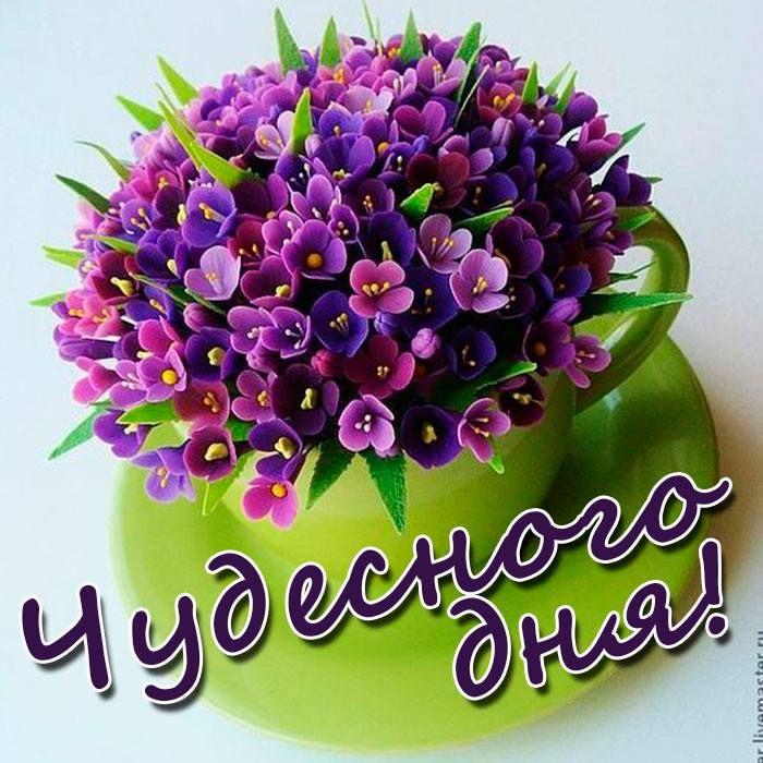 состоит красивые цветы для оли фото более