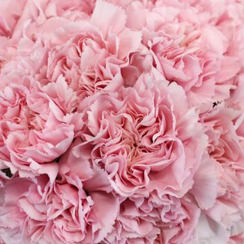 FiftyFlowers.com - Soft Pink Fresh Carnation Flowers - Similar to light pink for pick a pack?