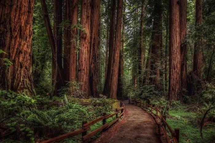 El Bosque Muir se encuentra en la costa del Pacífico en el condado de Marin, California y fue fundado por la pareja que le dio su nombre. Dada su ubicación cercana a la costa, el bosque se encuentra regularmente cubierto de neblina, provocando que la humedad concentrada en el ambiente contribuya al crecimiento de las imponentes sequoias.