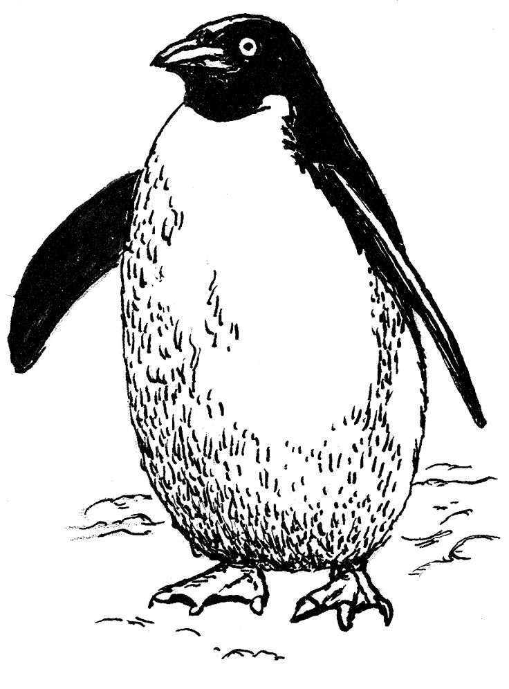 26 best penguin doodle images on Pinterest Penguin, Penguin - penguin template
