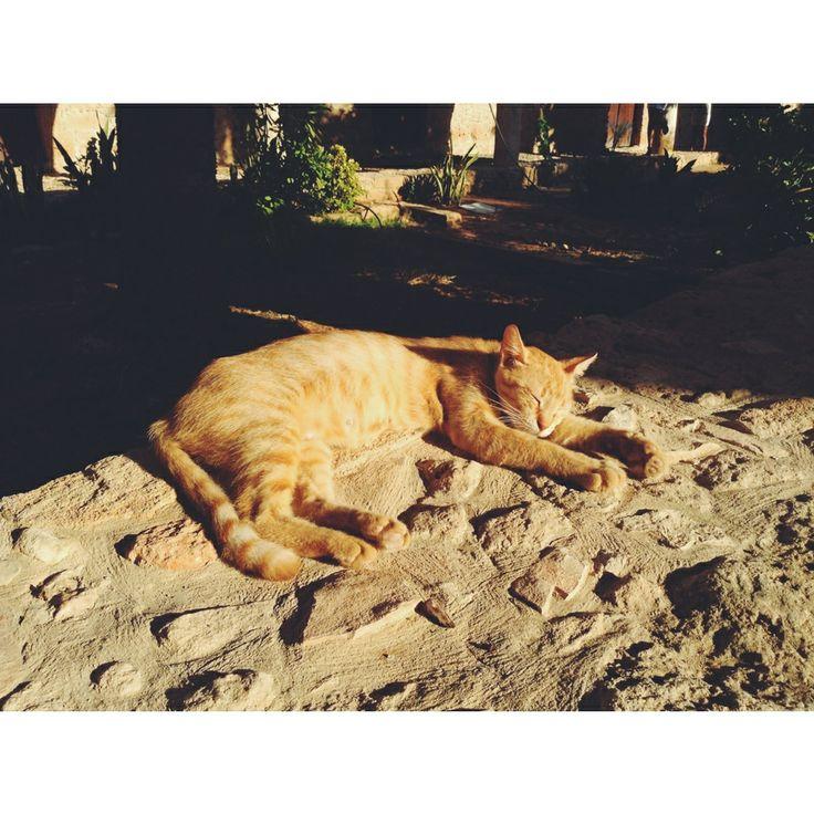 Chipre. El gato