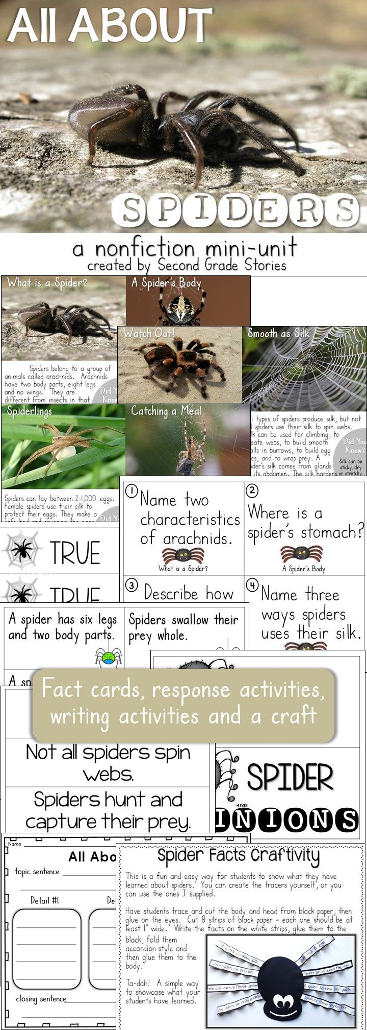 178 best αράχνη images on Pinterest | Male witch, Bugs and Fine motor