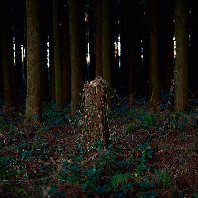 【jun_3716】さんのInstagramの写真をピンしています。《今日の1枚 today's photo 『林の中の其処-soco-』 ・ 其処は太陽の光でうっすらと現れる不思議な空間。 ・ 独特な色、独特なニオイ、独特な雰囲気、シャッターを切らざるを得なかった。 ・ #photo #photography #nikon #instagram #japan #camera #tree #forest #green #contrast #dark #sunlight #plant #nature #写真好きな人と繋がりたい #写真撮ってる人と繋がりたい #ファインダー越しの私の世界 #カメラ #一眼レフ #林 #木 #自然 #緑 #コントラスト #陰影 #明暗 #自然光 #カメラ旅 #伊豆大島》