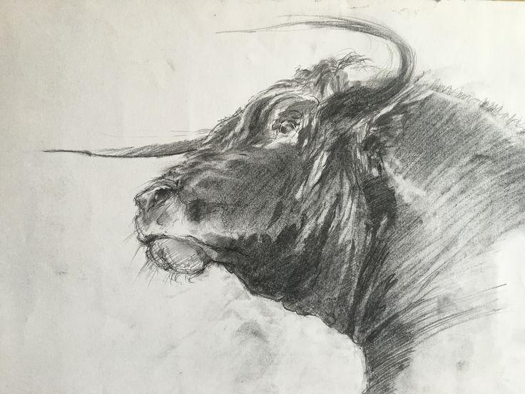 Bull2. Pencil, charcoal