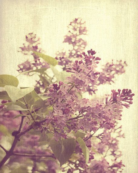 Lilac Tree Vintage Spring Art Print  Purple by SevenElevenStudios