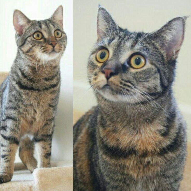 PopUp AdoptAThon Saturday! Adoption, Cat carrier