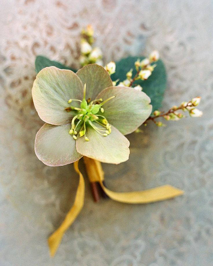 hellebores boutonniere, winter or early spring option.