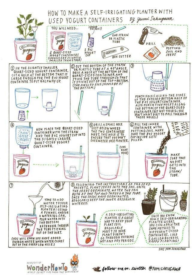 Selbstbewässerungstöpfe aus Joghurtbechern