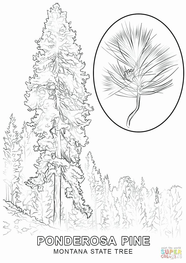 Alaska state bird coloring page luxury nevada state bird