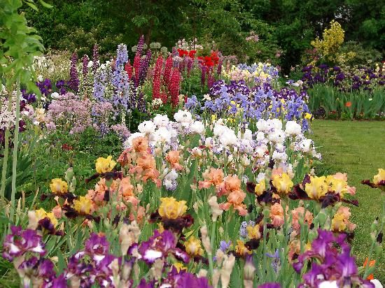 44 Best Images About Iris Want Gardens On Pinterest
