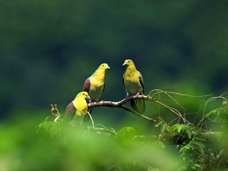 Bird Sanctuaries in Meghalaya, India @ Sanctuariesindia.com